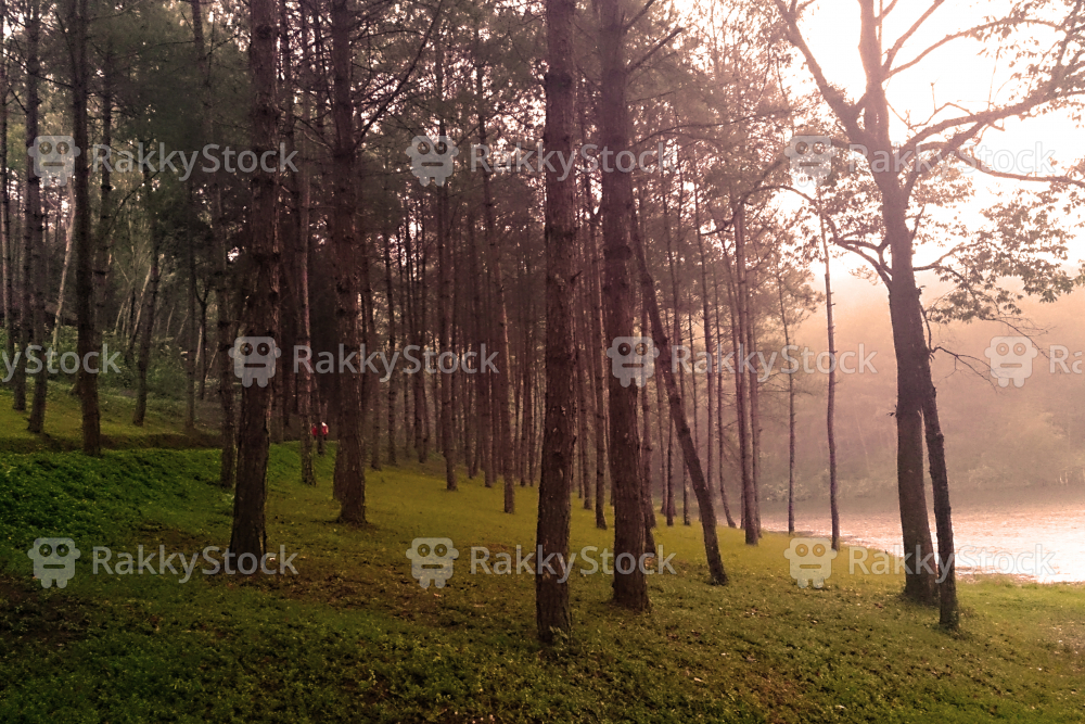 Pine Forest with Lake