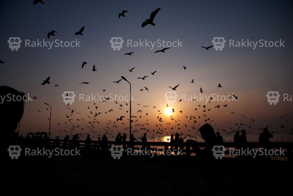 Silhouette of birds flying over sunset